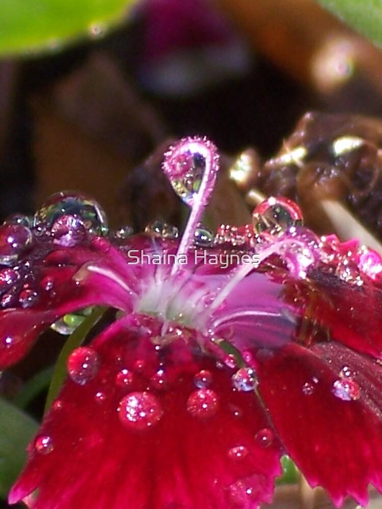 Sparkling Gem by Shaina Haynes