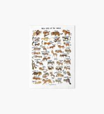 Wildkatzen der Welt Galeriedruck