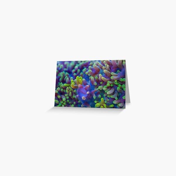 Corallimorph Greeting Card