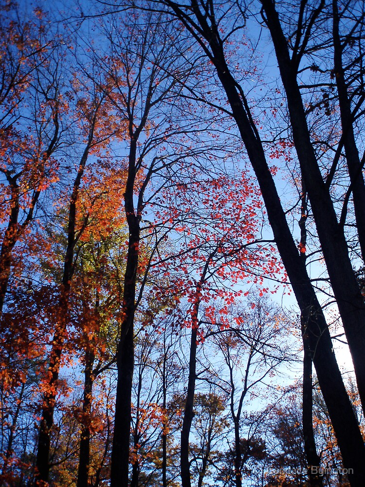 Halloween Trees by Candace Byington