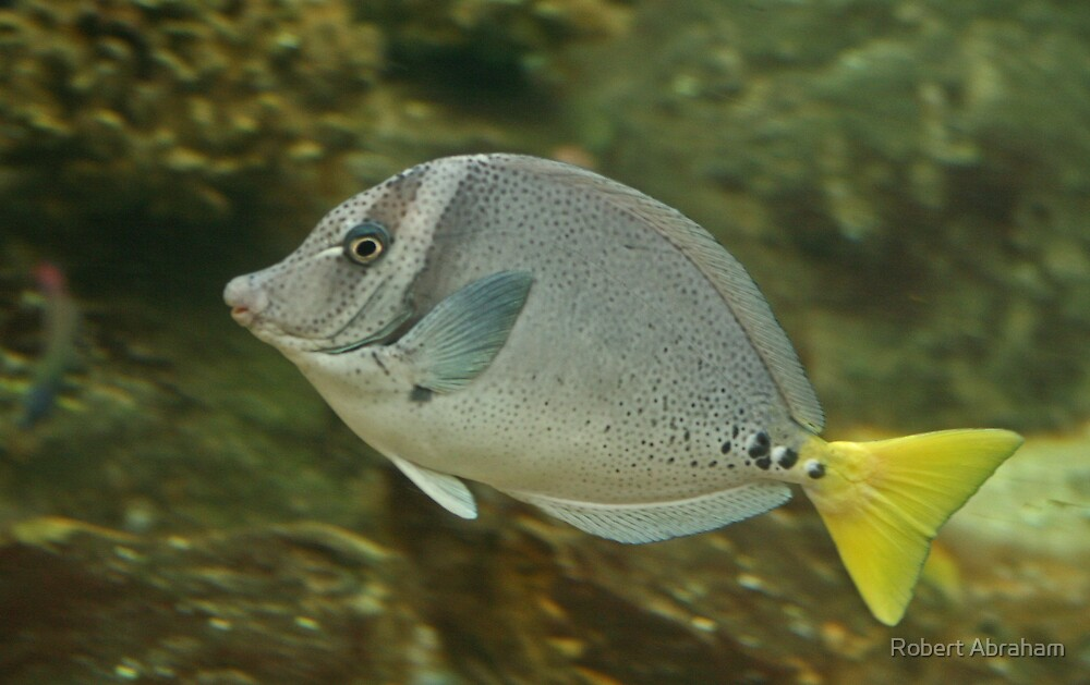 Tropical Fish by Robert Abraham