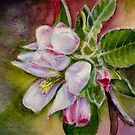 Apple Blossom on a Greeting Card by Dai Wynn