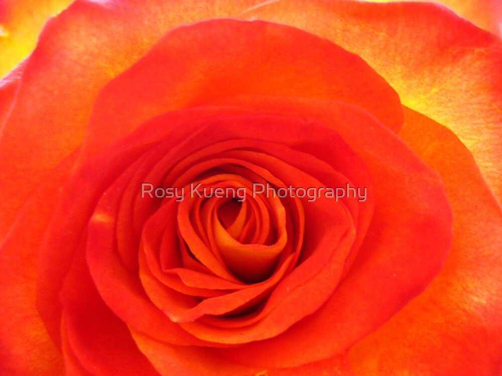 Red Heart by Rosy Kueng Photography