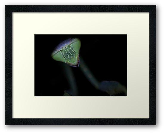 Mantis at night. by Stephen Brown