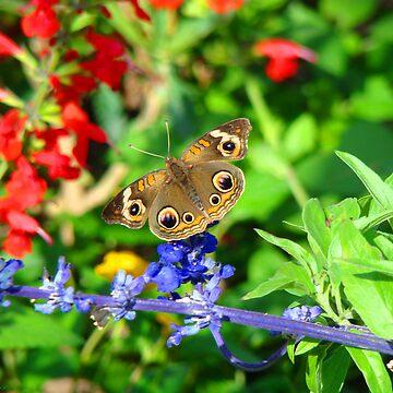 Butterfly I by OceanicDreams