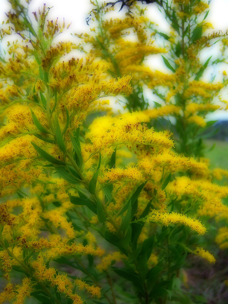 """Goldenrod"" Tall and Proud by DottieDees"