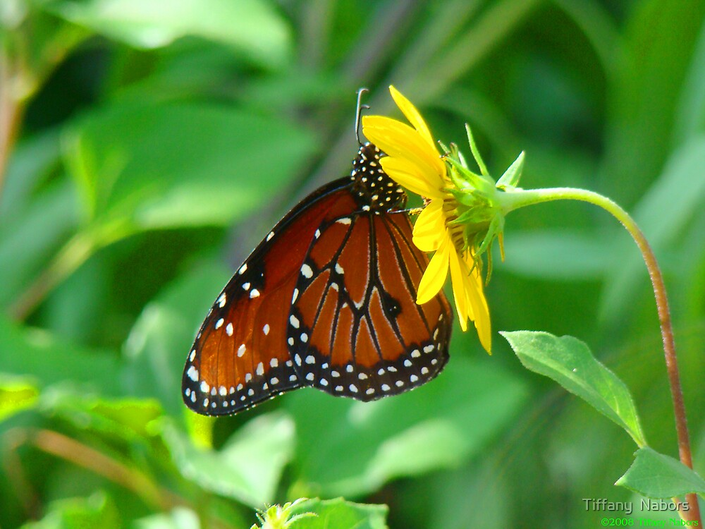 Butterfly III by Tiffany  Nabors