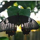 Butterfly by Julie Sherlock