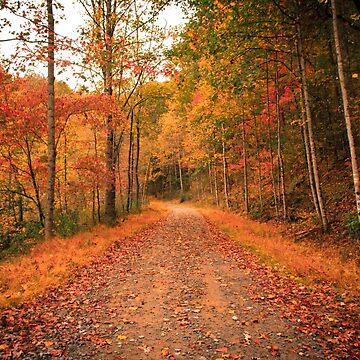 Through the woods in Fall by RoseC