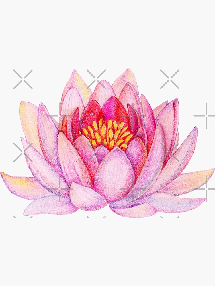 Rosa Lotusblume von alenazenart