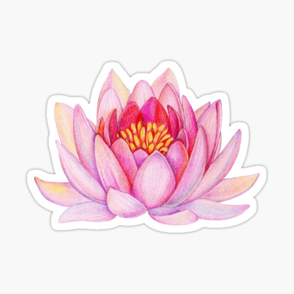 Pink lotus flower Sticker
