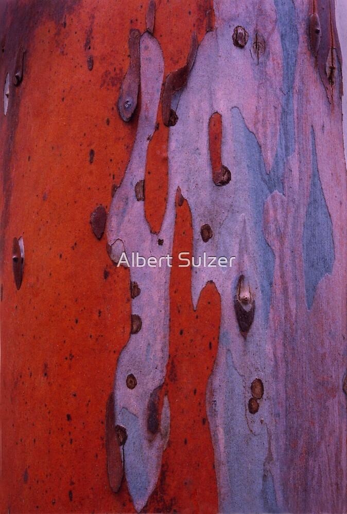Red,Wet Bark by Albert Sulzer