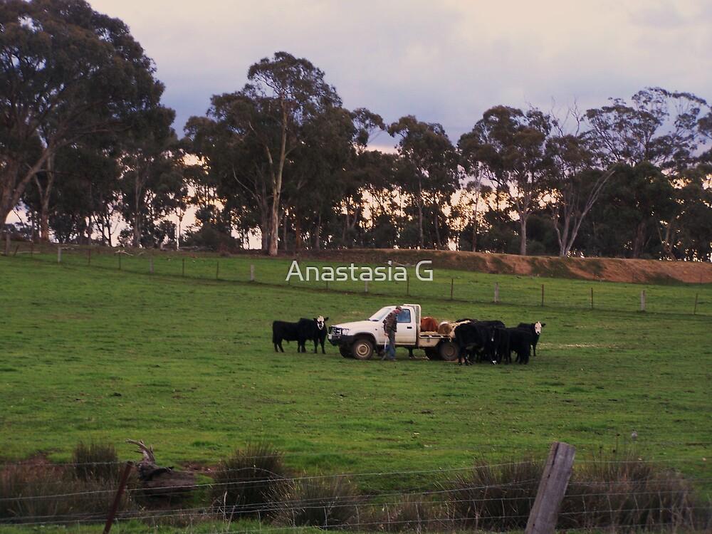 Feeding The Cows by Anastasia G