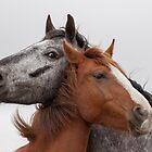 Best Friends by Gill Langridge