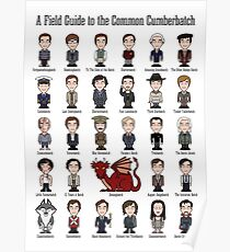 A Field Guide to the Common Cumberbatch (print/poster) Poster