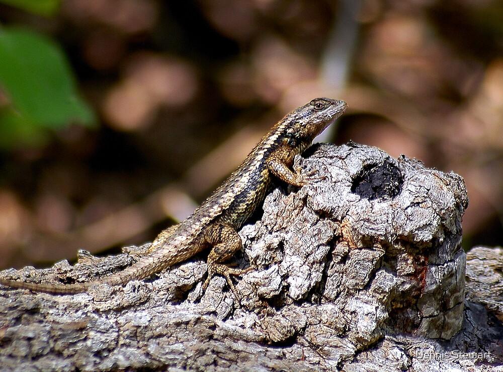 Texas Spiney Lizard by Dennis Stewart