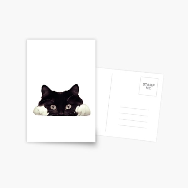 Peeking Cat Postcard