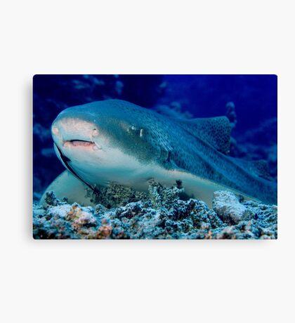 Leopard Shark, Great Barrier Reef Canvas Print