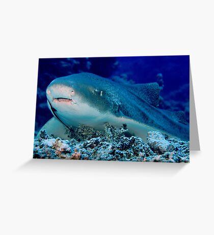 Leopard Shark, Great Barrier Reef Greeting Card