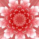 Pink Rose Petals Kaleidoscope by Barbara A Lane