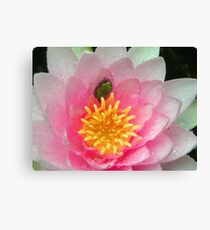 Froglet in a Blossom Canvas Print