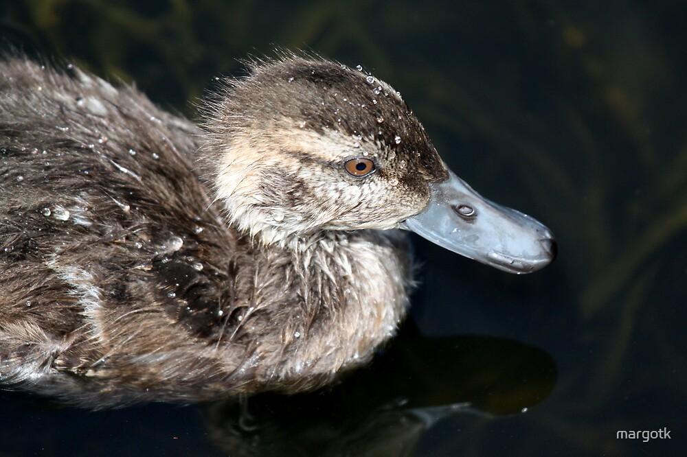 Duckling by margotk