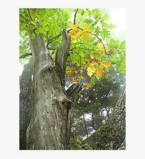Autumn Crown Photographic Print