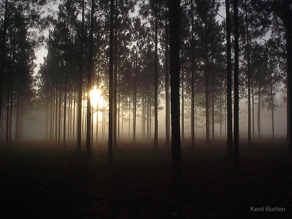 Dawn through the pines by Kent Burton