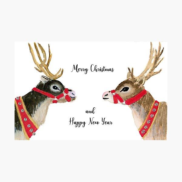 Reindeer Celebration Photographic Print