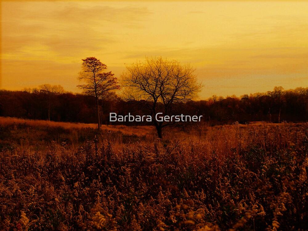 Safe Haven by Barbara Gerstner