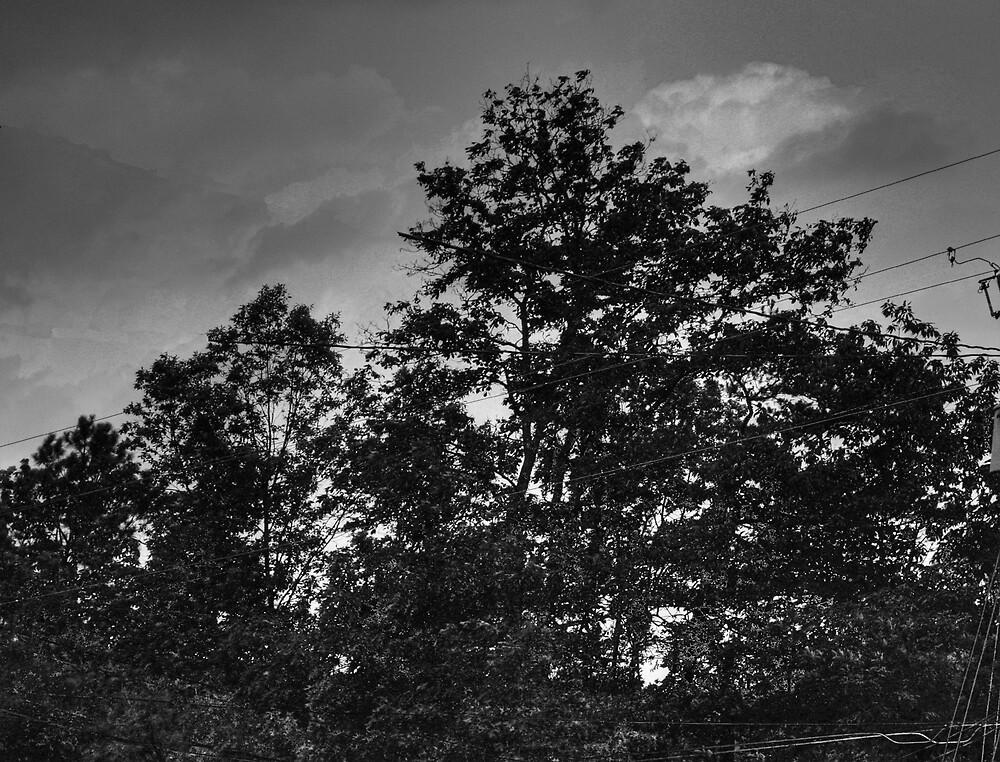 Stormy day by MishaPics
