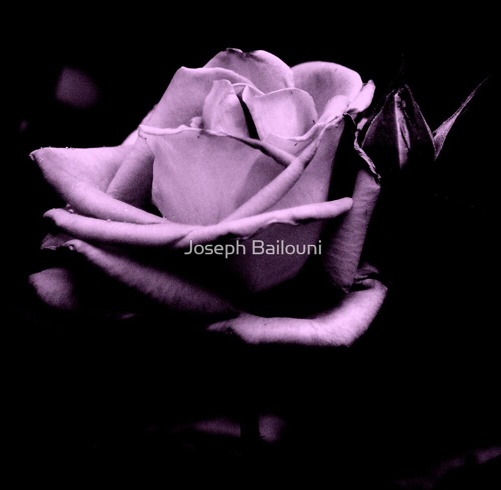 Black and White Purple Rose by Joseph Bailouni