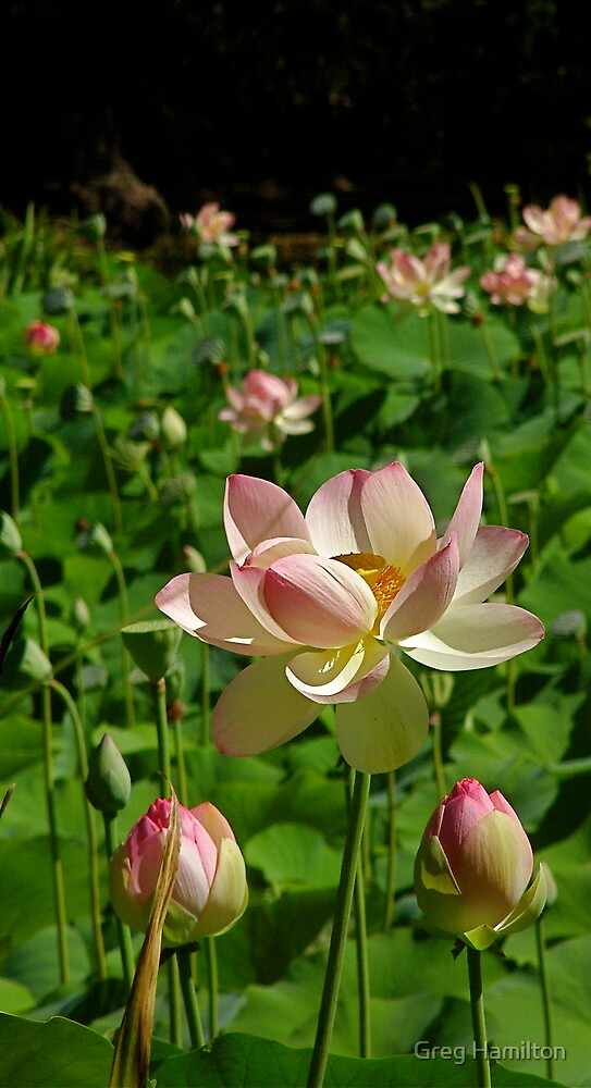 Botanic Flower 2 by Greg Hamilton