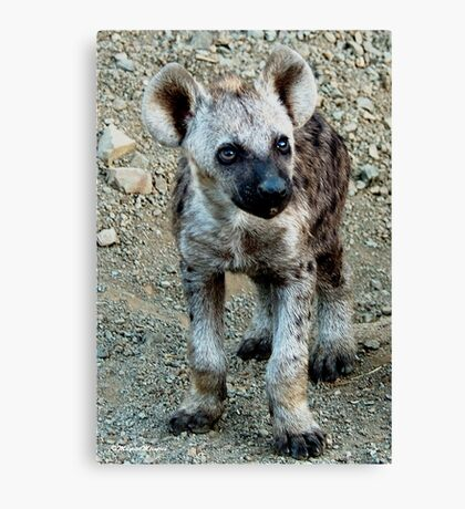 CUTE LITTLE BABY HYAENA - *Spotted Hyaena - Crocuta crocuta* Canvas Print
