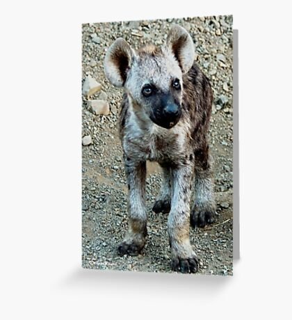 CUTE LITTLE BABY HYAENA - *Spotted Hyaena - Crocuta crocuta* Greeting Card