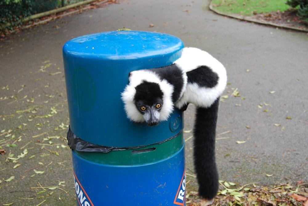 lemur by ampwizbit