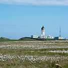 Lighthouse behind Bog Cotton by SiobhanFraser