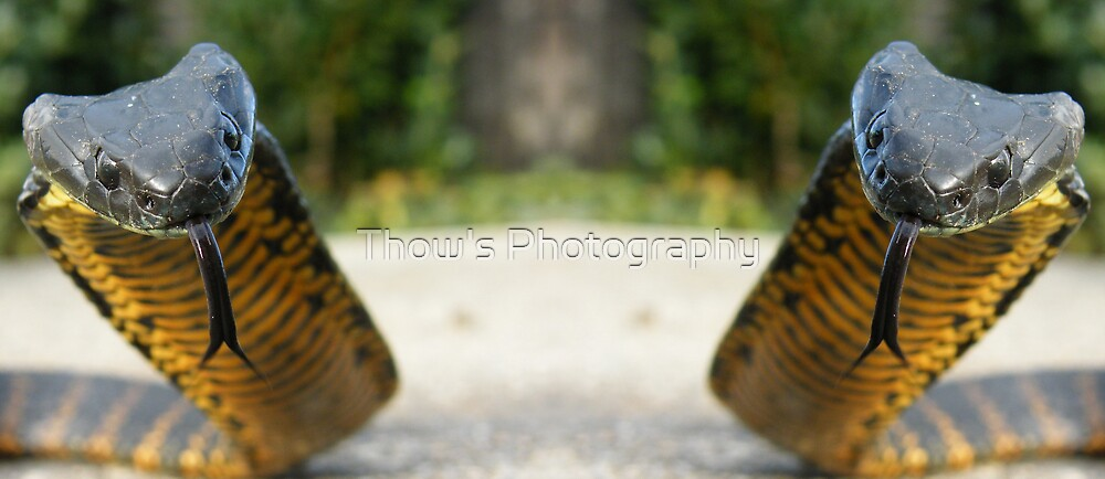 Two heads are better then one by Thow's Photography