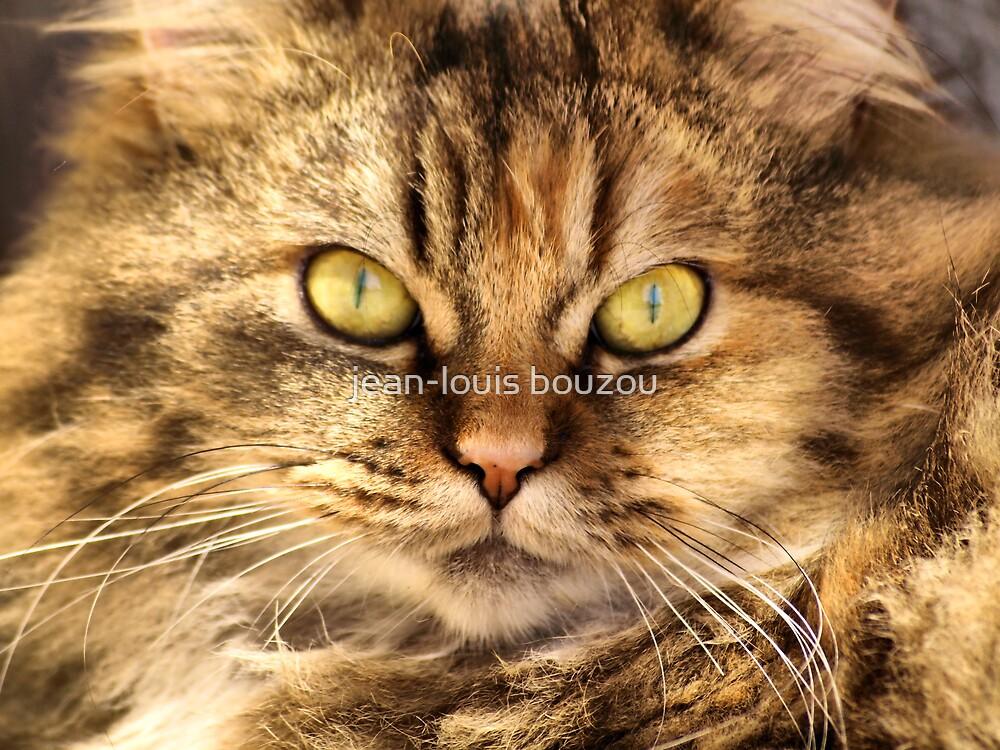 Homeless Kitty - 2 by jean-louis bouzou