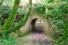 Nature Reclaims by DonDavisUK