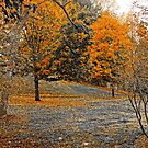Lineberger Park 7 by Rodney Lee Williams