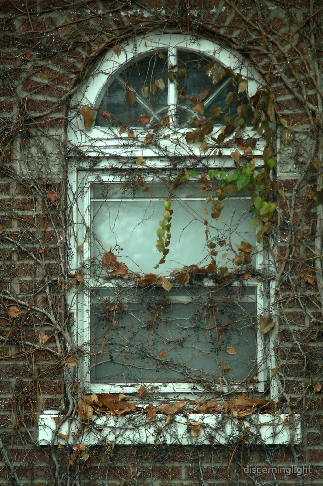 Vines with a Window by discerninglight