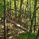 Woodland Bridge by Freedom