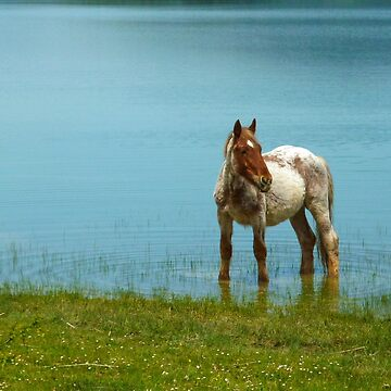 Horse in the water by martinbenito