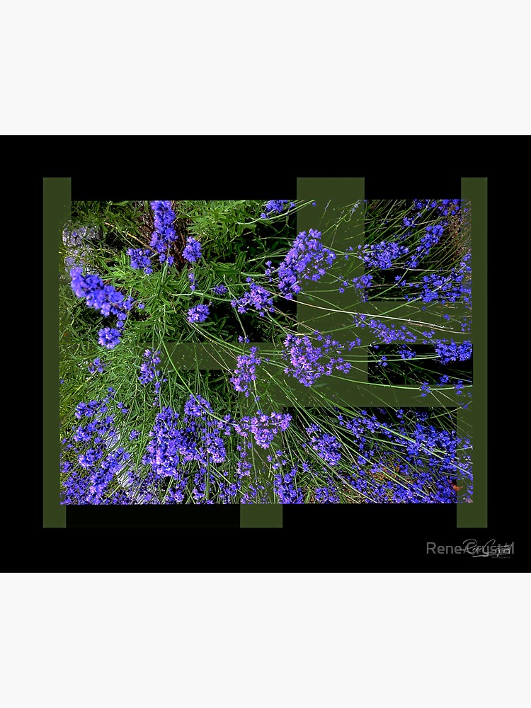 Lavender Blue Dilly Dilly by imagesbycrystal