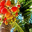 Saturation in the Tropics by Tommy Seibold