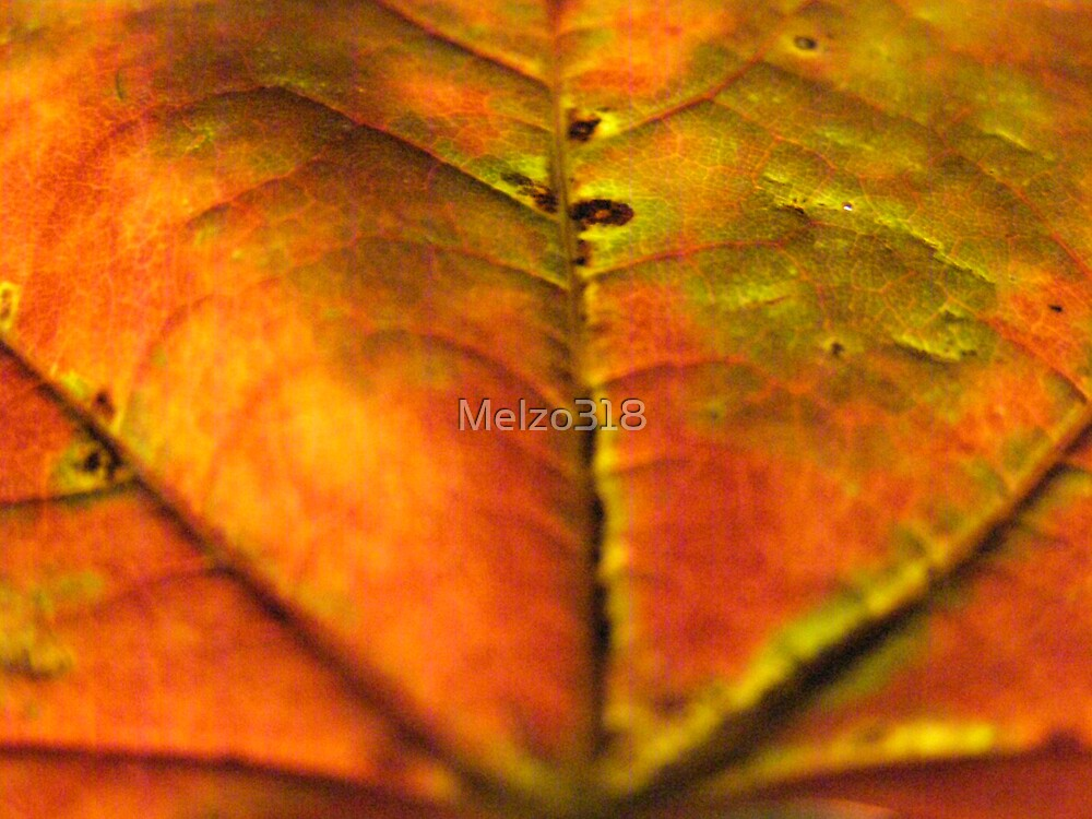 Natures Abstract by Melzo318