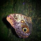 Digital Butterfly by Freedom
