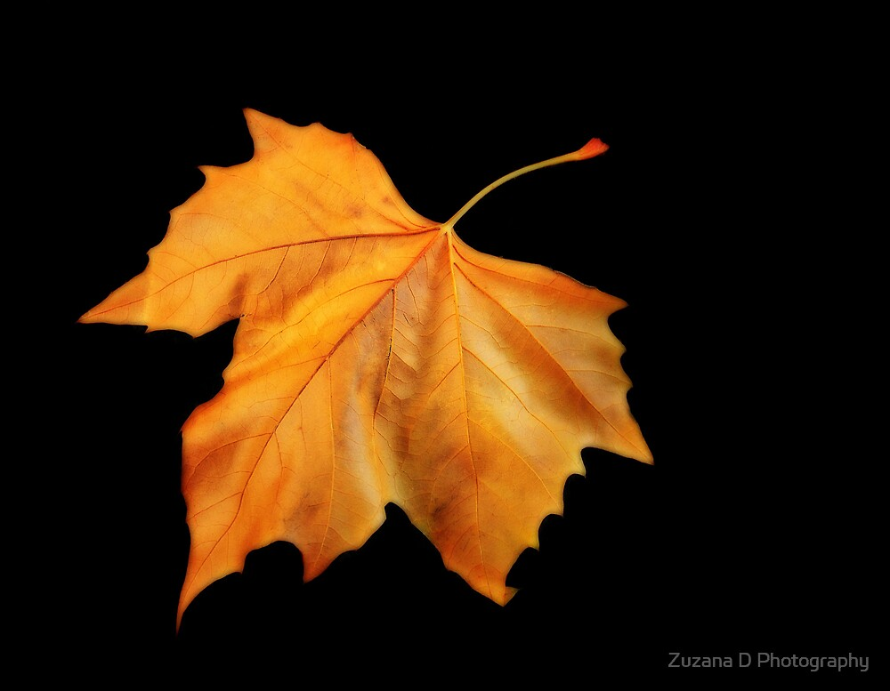 copper tones by Zuzana D Photography