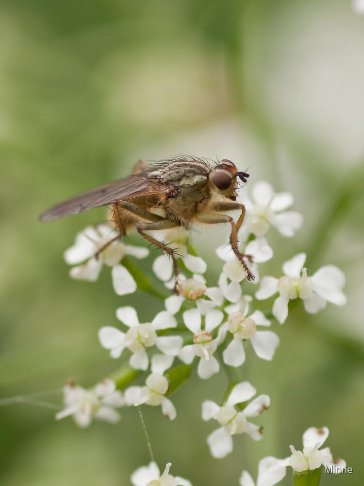 Fly by Minne